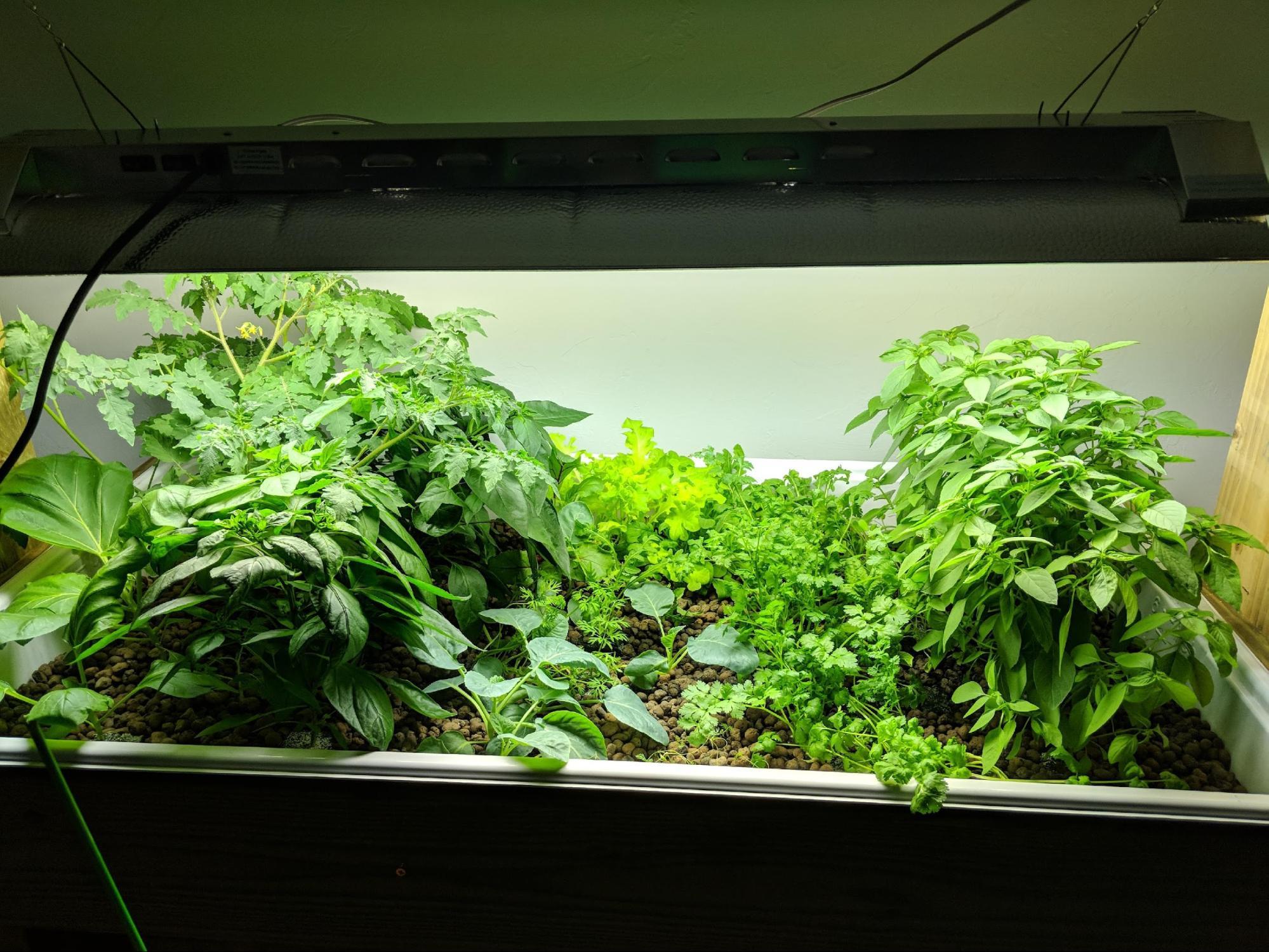 A healthy ebb and flow garden!